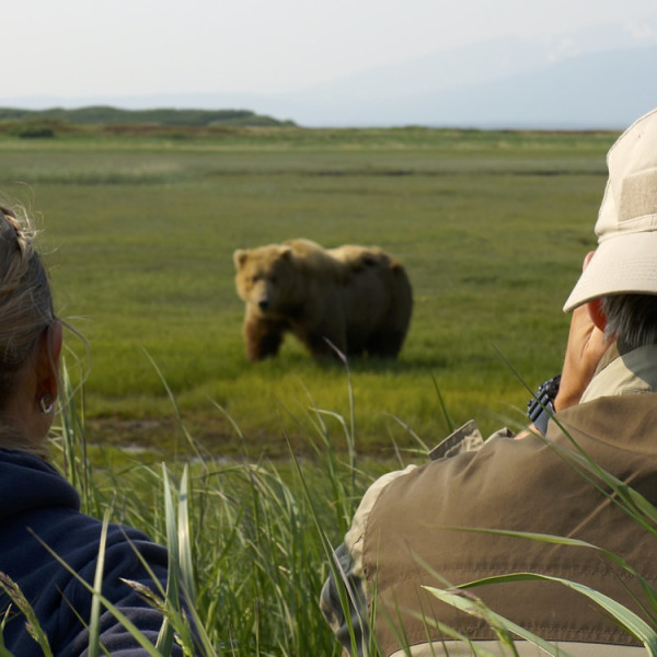 bear-viewing